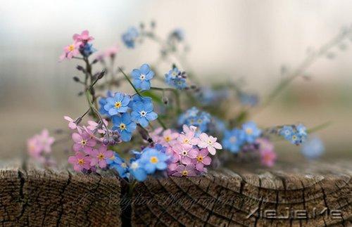早安心语:对未来的真正慷慨,是把一切献给现在 (3)