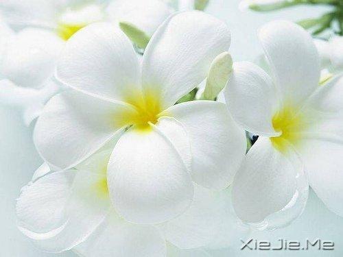 早安心语:对未来的真正慷慨,是把一切献给现在 (6)