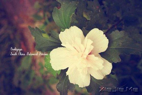 早安心语:对未来的真正慷慨,是把一切献给现在 (10)